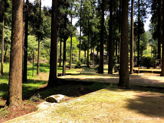 真名子木の香ランドキャンプ場 サイト